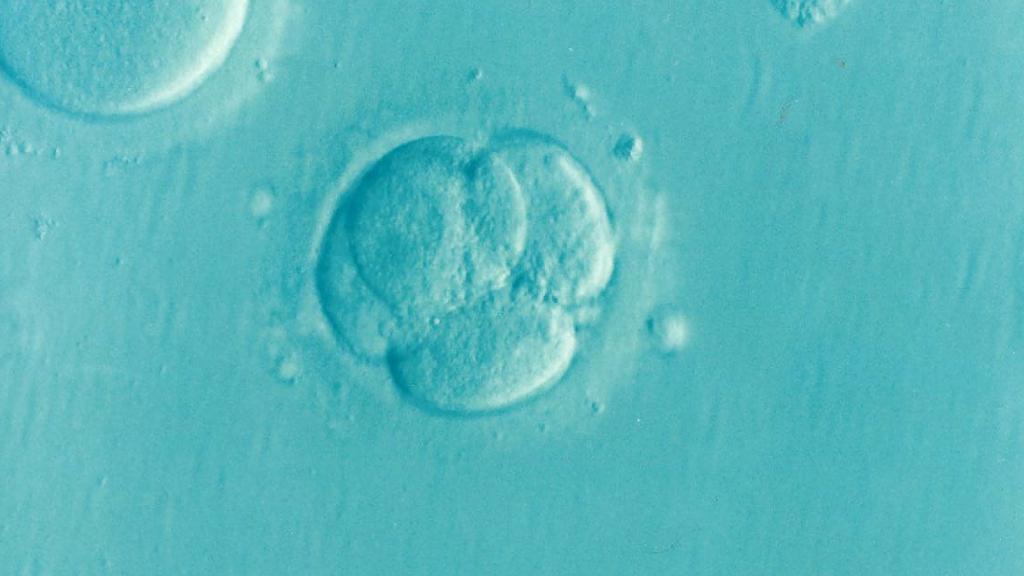 Gestación subrogada: cultivo de embriones