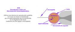 Gestación subrogada como técnica de reproducción asisitida